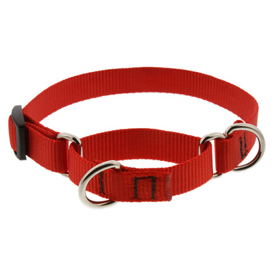 leads and collars